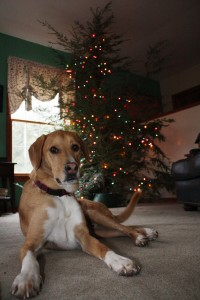 The Pooch and the Zip Tie Tree