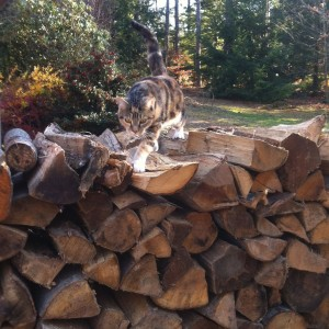 The Beaze stalks the wood pile!
